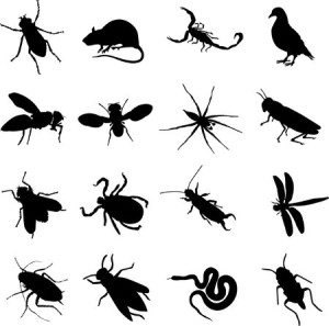 AIling House Pest Managent - Carmel CA - Frequently Asked Questions - Pest Control Services Image