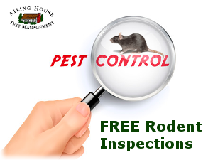 Rat Mice Rodent Control – Rat- Mice Exterminator Carmel CA - AIling House Pest Management Inc
