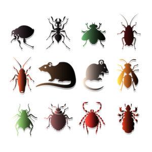 local pest control service near me - Ailing House Pest Management Inc.