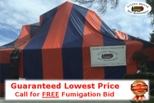 Guaranteed Lowest Price Termite Fumigation Treatment – Monterey CA - Ailing House Pest Management